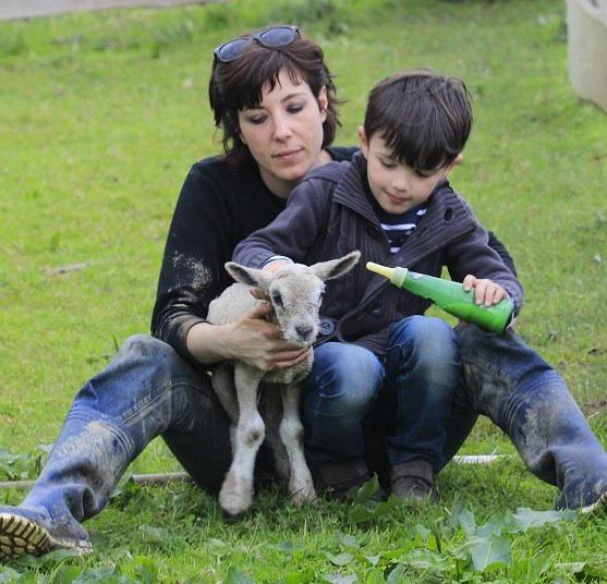 La guerre des moutons
